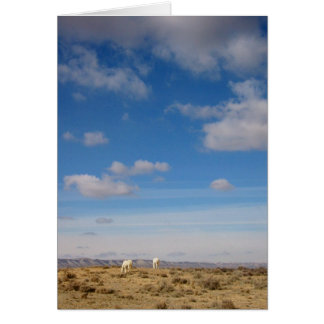 Grazing the Wind River Range, Wyoming Card