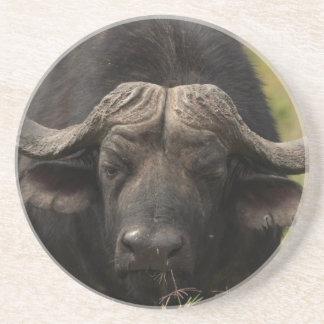 Grazing Water Buffalo Coaster