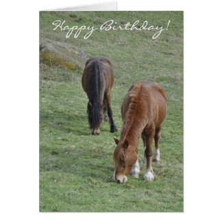 Grazing Welsh cobs birthday Card