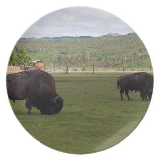 Grazing Wood Bison Dinner Plates