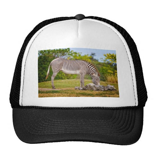 Grazing Zebra Mesh Hats
