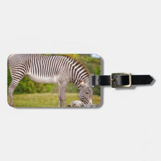 Grazing Zebra Luggage Tag