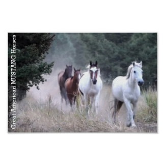 Great American MUSTANGS Wild Horses Poster