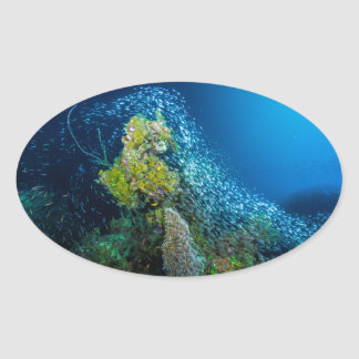 Great Barrier Reef Tropical Fish Coral Sea Oval Sticker