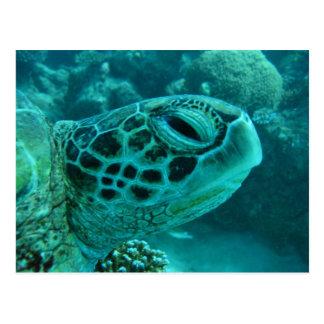 Great Barrier Reef  Turtle Postcard