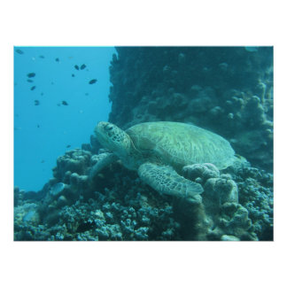 Great Barrier Reef  Turtle Poster