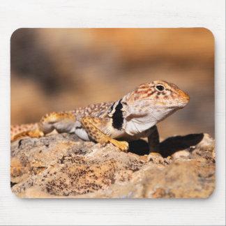 Great Basin Collared Lizard - Burr Trail - Utah Mouse Pad