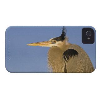 Great Blue Heron, Ardea herodias, adult, Case-Mate iPhone 4 Case