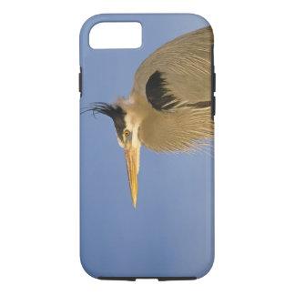Great Blue Heron, Ardea herodias, adult, iPhone 7 Case