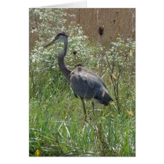 Great Blue Heron - Ardea herodias Card