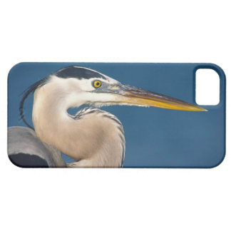 Great Blue Heron (Ardea herodias). USA, Florida, iPhone 5 Cover