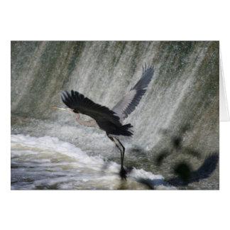 Great Blue Heron at falls card