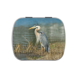 Great Blue Heron at the Pond Jelly Belly Tin