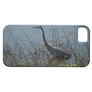 Great Blue Heron at Viera Wetlands iPhone 5 Case