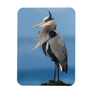 Great Blue Heron, attempting to preen Rectangular Photo Magnet