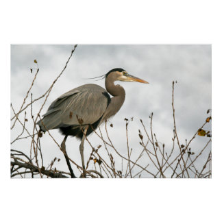 Great Blue Heron Birds Wildlife Animals Poster