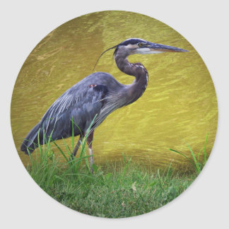 Great Blue Heron By The Bank Classic Round Sticker