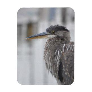 Great Blue Heron - Close Up Rectangular Photo Magnet