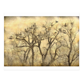 Great Blue Heron Colonies Fine Art Postcard