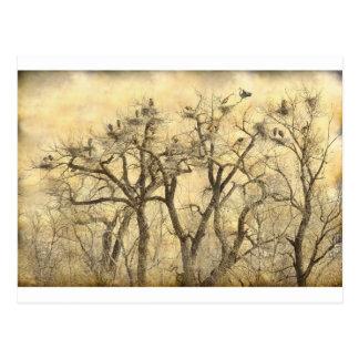 Great Blue Heron Colonies Fine Art Postcard