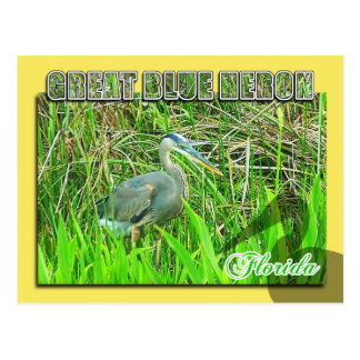 Great Blue Heron, Everglades National Park, FL Postcard