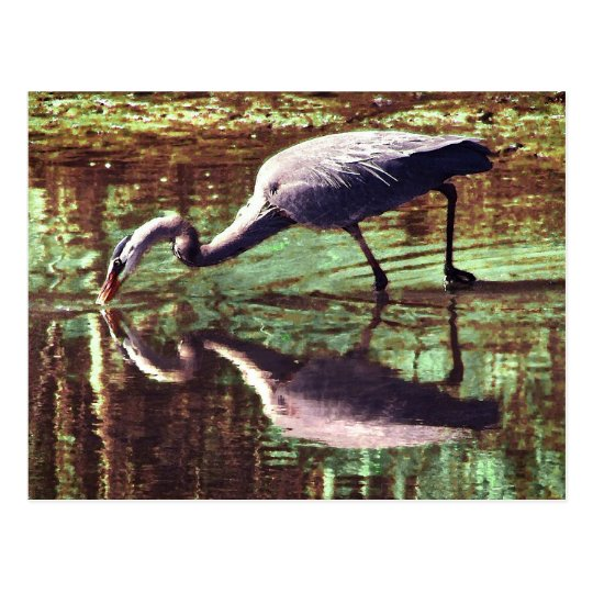Great Blue Heron Fishing Postcard
