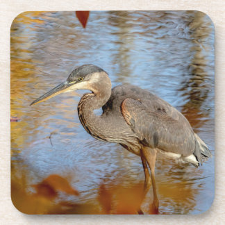 Great Blue Heron framed with fall foliage Coaster