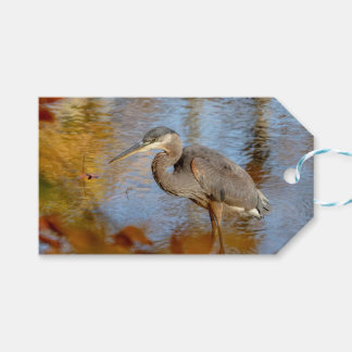 Great Blue Heron framed with fall foliage Gift Tags