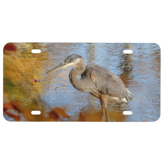 Great Blue Heron framed with fall foliage License Plate