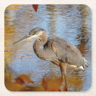 Great Blue Heron framed with fall foliage Square Paper Coaster