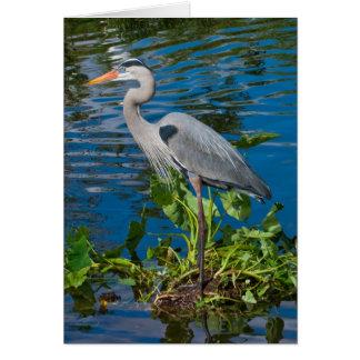 Great Blue Heron in Lake Greeting Card