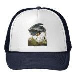Great Blue Heron, John James Audubon Hat