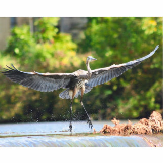 great blue heron landing at falls acrylic cut outs