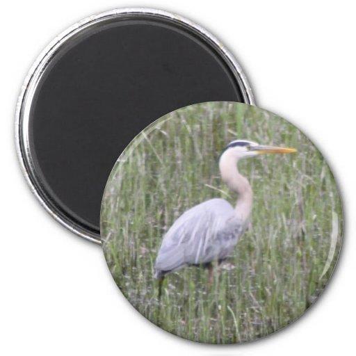 Great Blue Heron Refrigerator Magnets