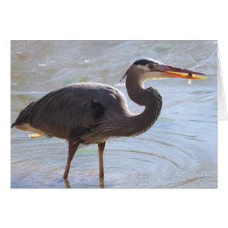Great Blue Heron Notecard - Blank Inside