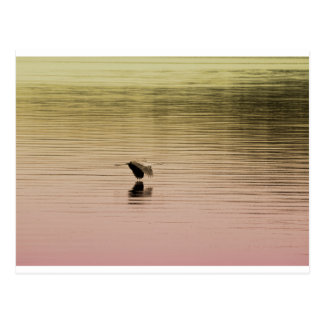 Great Blue Heron on Gradient Background Postcard