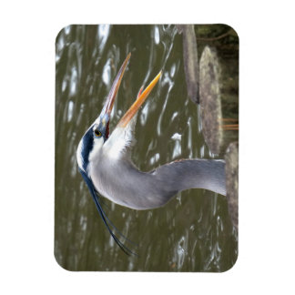 Great Blue Heron Rectangular Photo Magnet