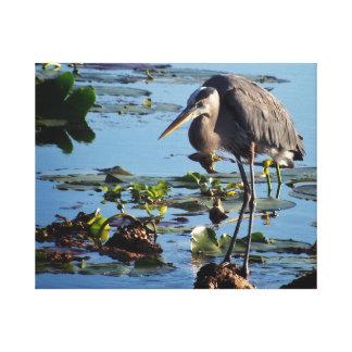 Great blue heron resting at lakeside canvas print