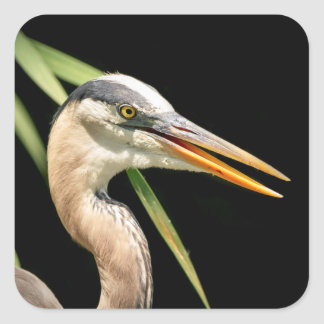 Great Blue Heron Square Sticker