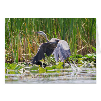 Great Blue Heron taking off Card