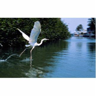 Great blue heron (white phase), Key Largo, Florida Photo Cut Outs