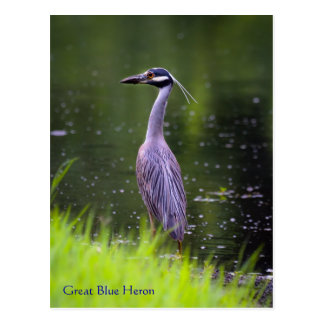 Great Blue Heron Wildlife Series # 20 Postcard
