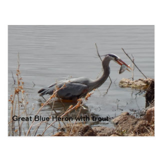 great blue heron with trout postcard