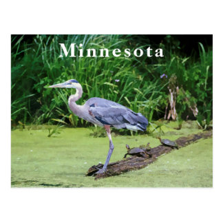Great Blue Heron with Turtles and a Lake Postcard