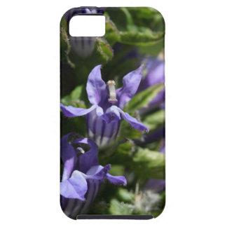 Great Blue Lobelia (Lobelia siphilitica) iPhone 5 Case