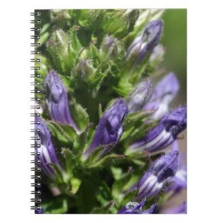 Great Blue Lobelia (Lobelia siphilitica) Notebooks