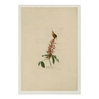 Great Carolina Wren Poster