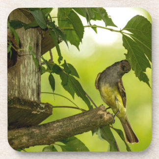 Great Crested Flycatcher Beverage Coasters