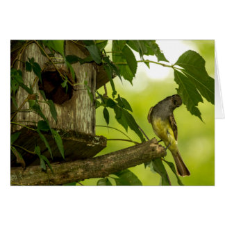 Great Crested Flycatcher Card