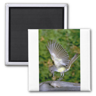 Great-crested Flycatcher Magnet